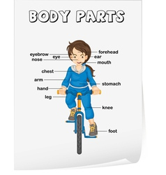 Body Parts Diagram Poster vector image