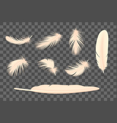 feathers transparent set vector image