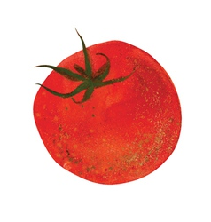 fresh tomato vector image