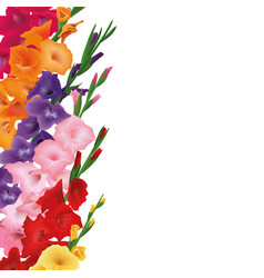 gladioluses card copyspace place for text sword vector image