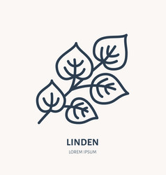 Linden flat line icon medicinal plant leaves vector