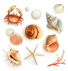 Seashells set icons vector