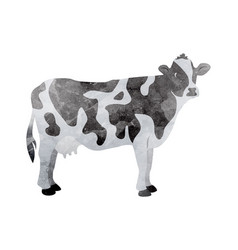 watercolor cow on white vector image vector image