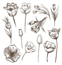 Hand drawn tulips flowers set vector image