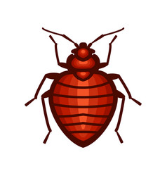 bedbug insect design vector image