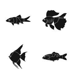 Discus gold carp koi scleropages fotmosus vector