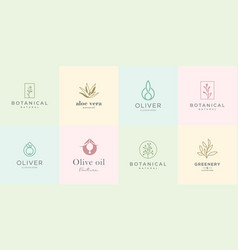 Feminine design logo collection elegant roses vector