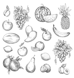 Fruits sketch isolated icons vector