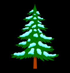 pine tree with snow in cartoon style isolated on vector image