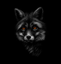 portrait of a fox head on a black background vector image