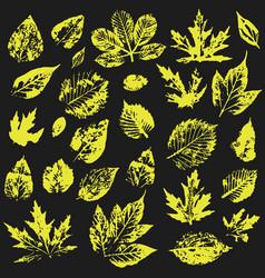 Set autumn leaves on a black background leaf vector