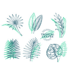 Set tropical leaves hand drawn tropical summer vector