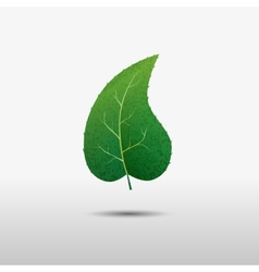 Green leaf of the tree icon vector image