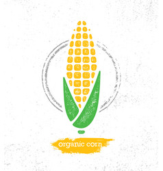 organic sweet corn on the cob creative vector image