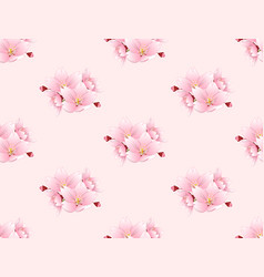 sakura cherry blossom flower seamless on pink vector image