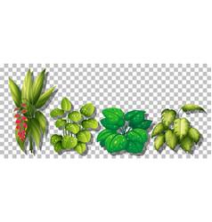 set various plants on transparent background vector image