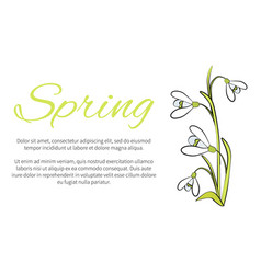 spring floral banner with text made of snowdrops vector image