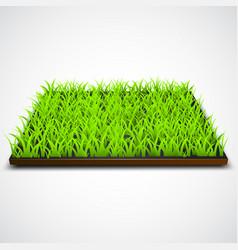 square green grass field vector image