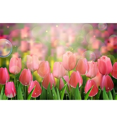Red tulips flowers in the garden vector image vector image