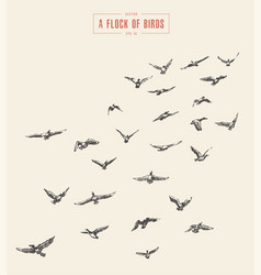 A flock of birds drawn sketch vector