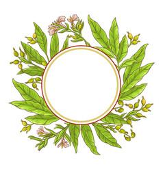 cardamom frame vector image