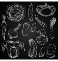 Fresh farm vegetables chalk sketches set vector