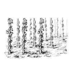 hops field vector image