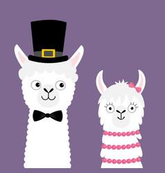 Llama alpaca animal set love couple happy vector