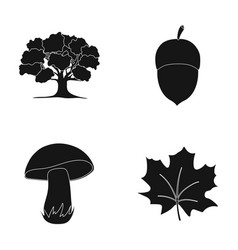 Oak acorn edible mushroom maple leafforest set vector