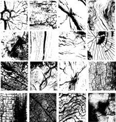 cracks vector image