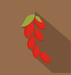 red berries of cornel or dogwood icon flat style vector image