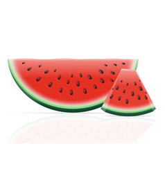 watermelon 06 vector image vector image
