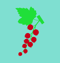 Black currant colorful isolated on light vector