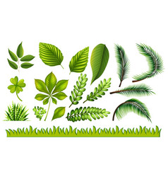 Different types of green leaves and grass vector
