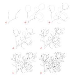 How to draw beautiful branch with magnolia vector