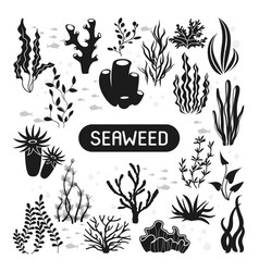 underwater silhouettes seaweed coral and algae vector image