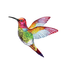 Watercolor of colorful bird vector