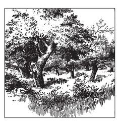 Apple tree vintage vector