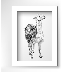 Artwork lama digital sketch of animal realistic vector