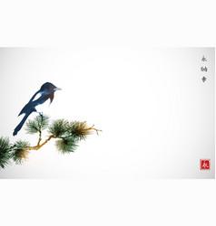 Big magpie bird sitting on pine tree branch vector