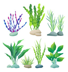 sea or aquarium algae types color set vector image