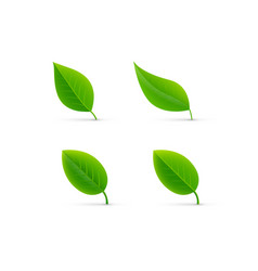 leaf isolated vector image