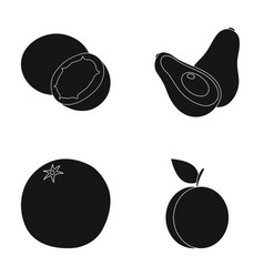 Coconut avocado orange plumfruits set vector