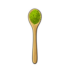 Drawing of bamboo wooden spoon with matcha green vector
