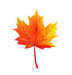 Maple autumn leaf realistic flat vector