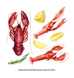 Set isolated watercolor crayfish lobster for vector