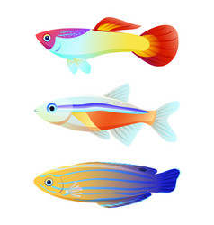 Aquarium fish silhouette isolated on white icons vector