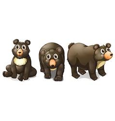 Black bears vector image