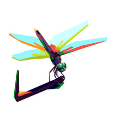 Colorful dragon fly vector