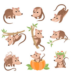 cute opossums animals in various poses set vector image